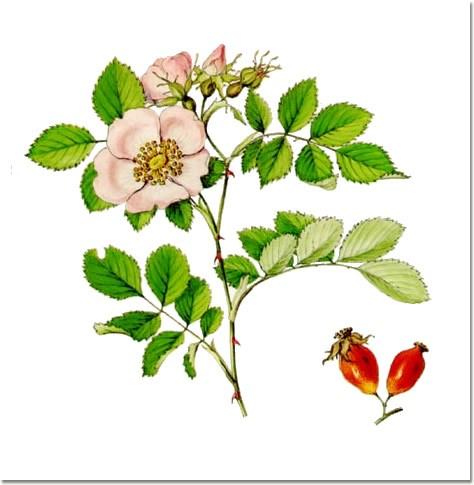 diarree fruit